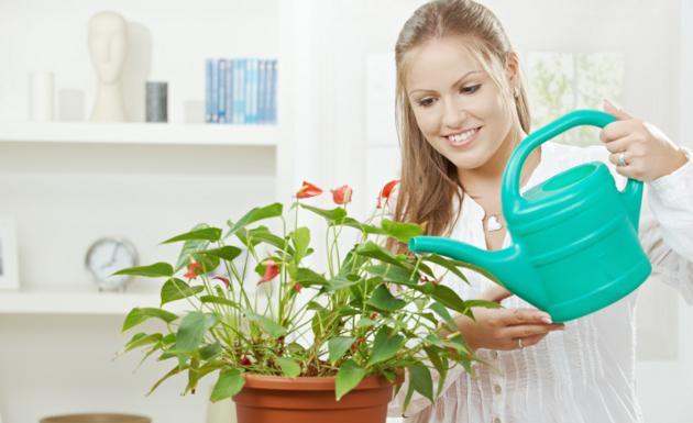 Consejos para tener plantas en casa
